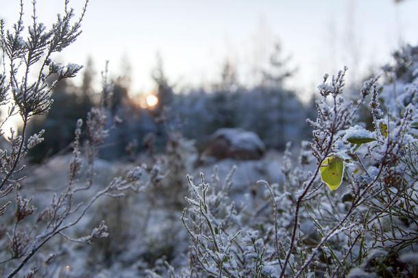 Kuva: Juha Jantunen