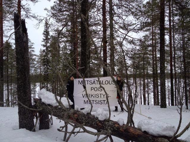 Metsähallituksen hakkuiden uhkaamia saaria Pesiöjärvellä Kainuussa. Kuva Mati Ikonen / Luonto-Liitto