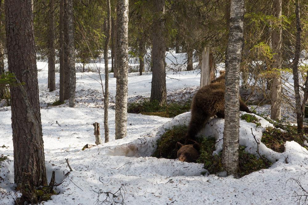 Karhun Talvipesä