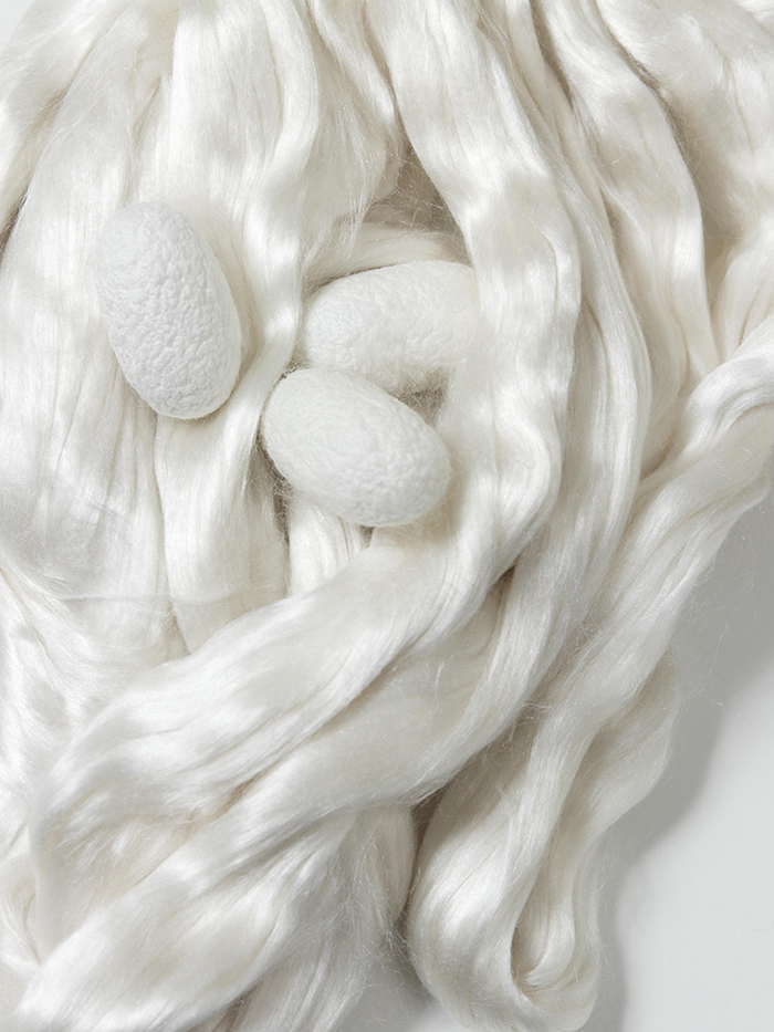 Silkkiperhosen toukan kotelo