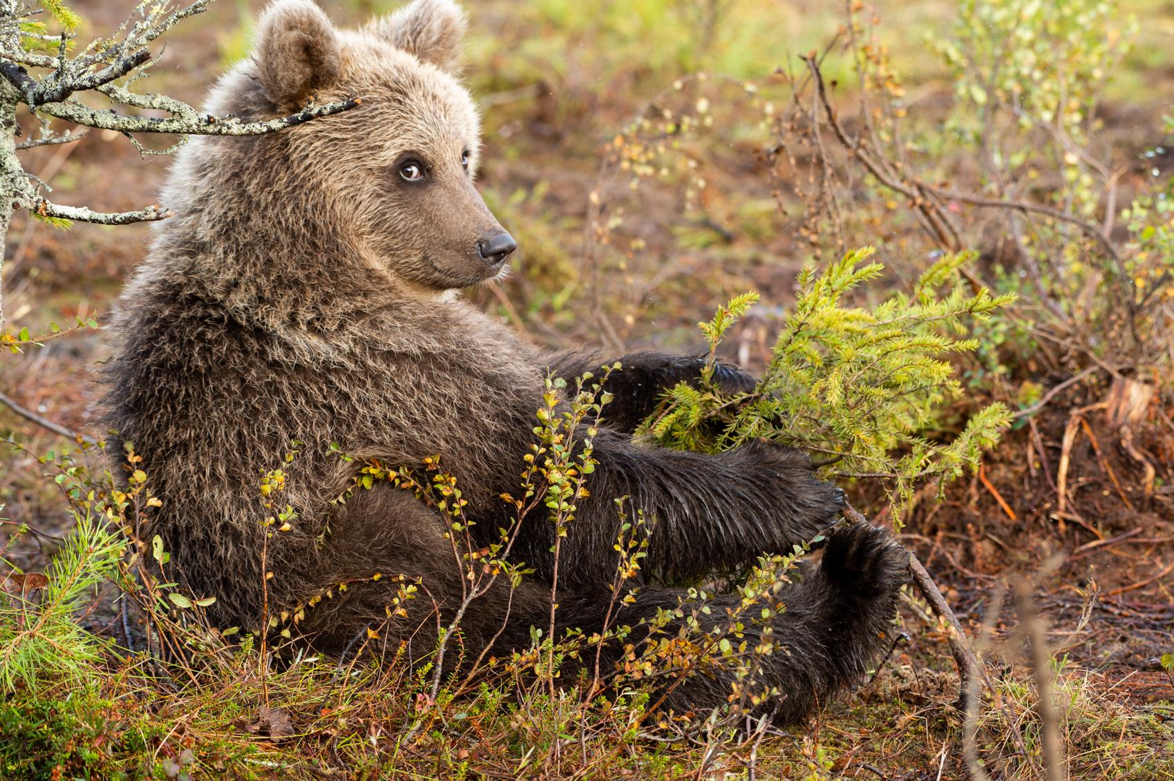 Karhu Juoksunopeus