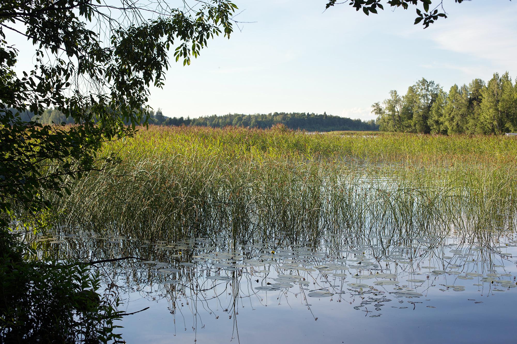 Suomi Luonto