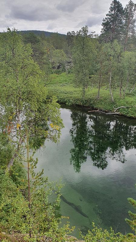 Suomu-joki